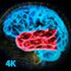 پروژه افتر افکت ساختار مغز